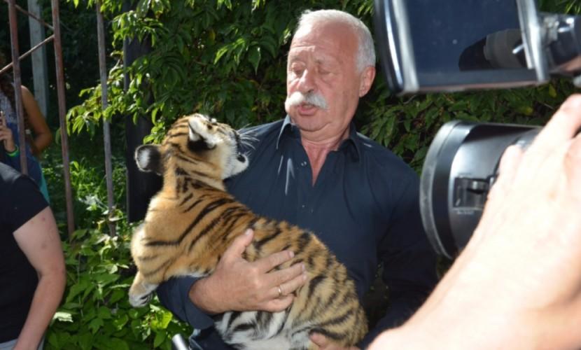 Леонида Якубовича укусил выкормленный собакой тигренок под Омском