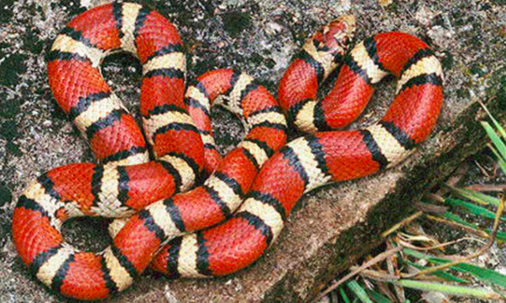 Красная змея с желтыми полосами напугала сотрудников офиса в центре Москвы