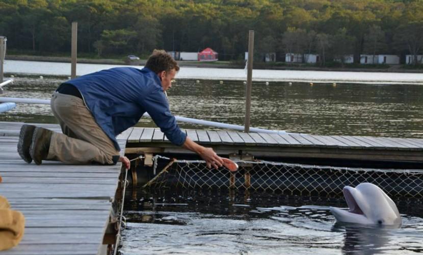 Зверей вПриморском океанариуме убивает система— Тренер морских млекопитающих