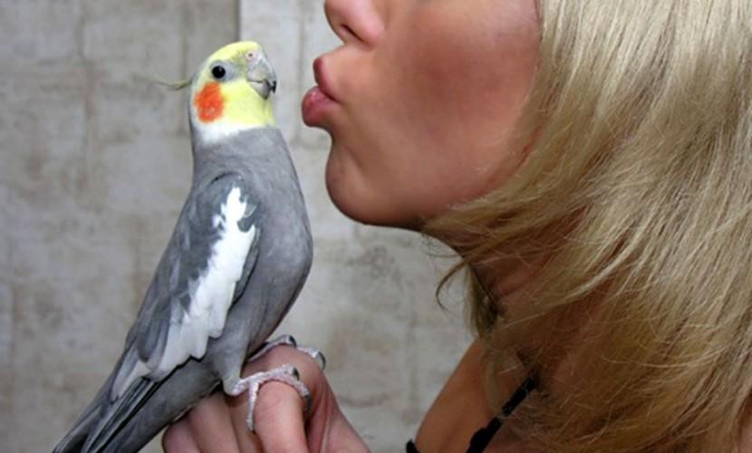 ВКувейте попугай сказал жене обизмене мужа сгорничной