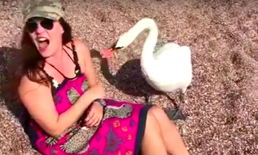 Екатерину Андрееву на пляже в Черногории заклевал лебедь и попал на видео