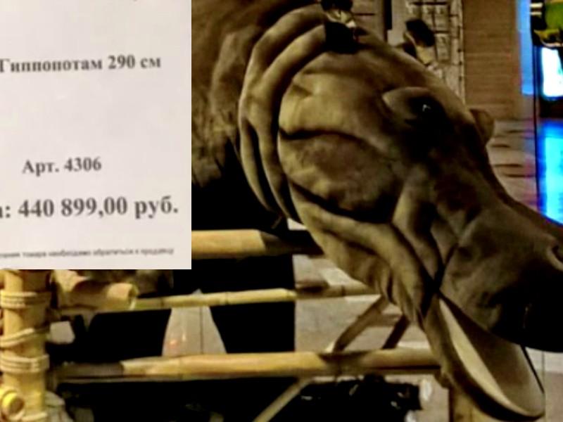 В Москве выставили на продажу филиппинского 150-килограммового гиппопотама