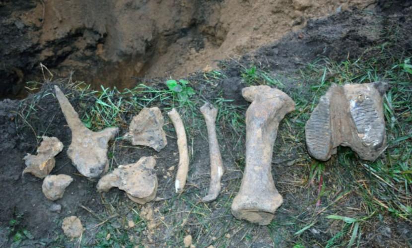 Останки древнего существа обнаружили работники водоканала из Омска
