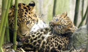 Люди погубят две трети диких животных на Земле к 2020 году, - ученые