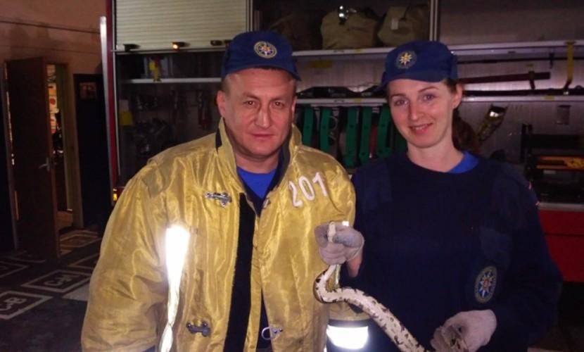 Внушавшую людям страх змею спасатели нейтрализовали с помощью швабры в подмосковной Балашихе