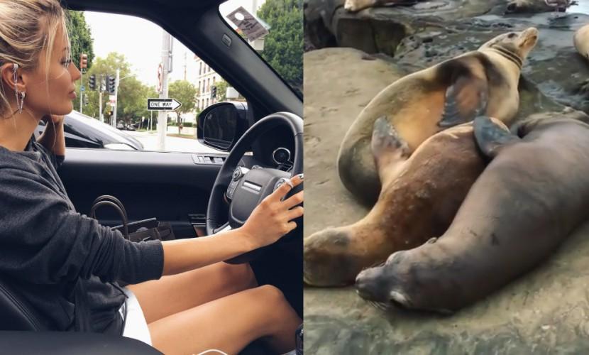 Виктория Боня сняла на видео свой побег из Монако к стае морских котиков в Сан-Диего