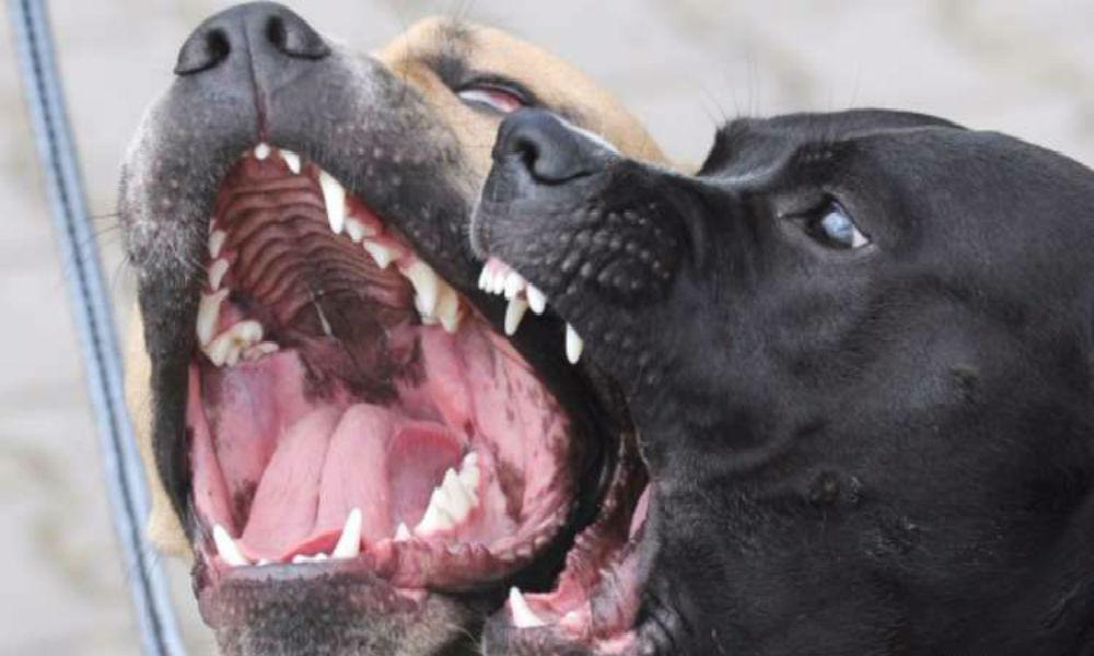 Разъяренные собаки загрызли первоклассника возле дома бабушки под Челябинском