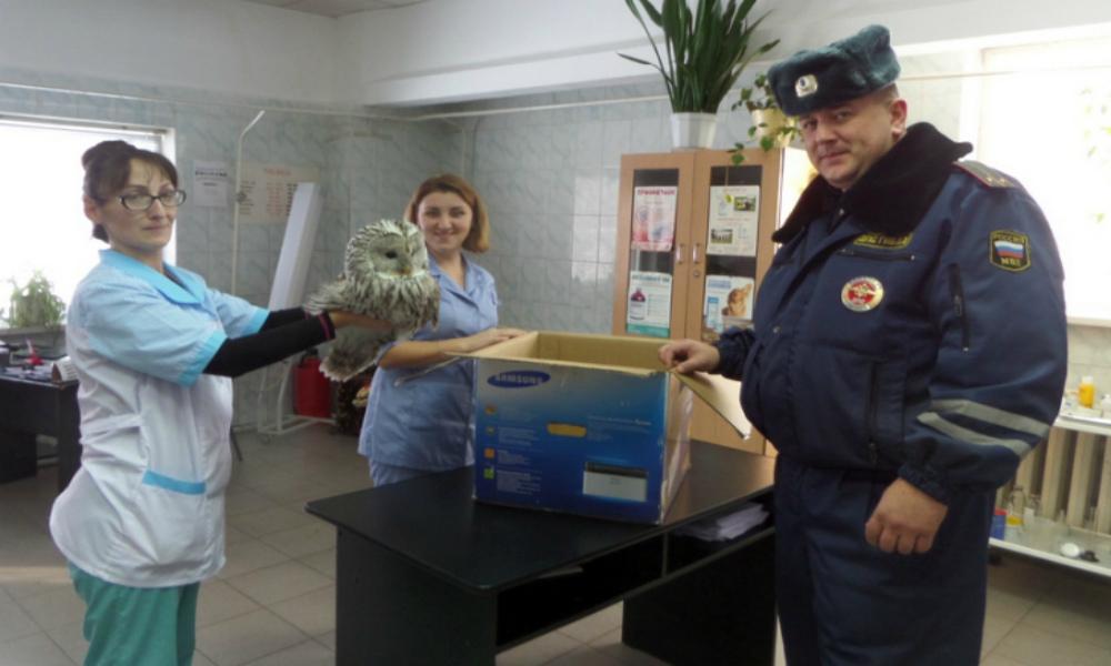 В Красноярском крае спасли умирающую от холода сову
