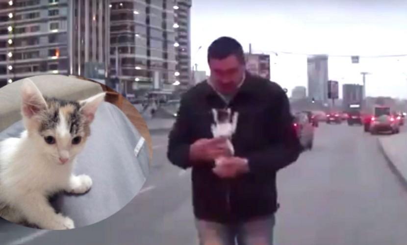 Чудесное спасение бездомного котенка из-под колес автомобиля сняли на видео в Новосибирске