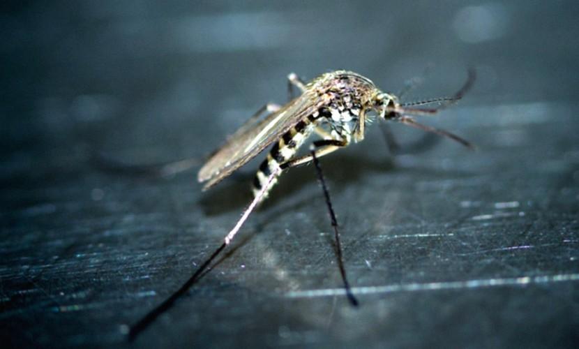 Два случая заболевания лихорадкой Денге выявлено наЯмале