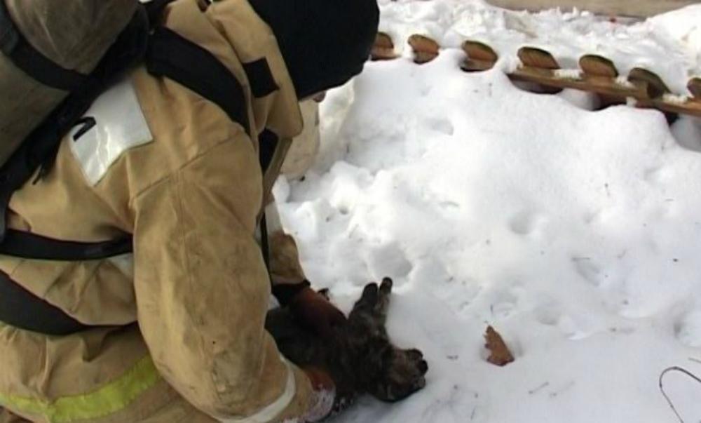 Сотрудник МЧС из Орла реанимировал пострадавшую при пожаре кошку