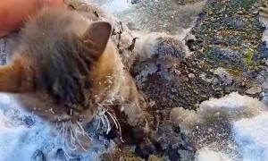 Спасение вмерзшей в лед кошки сняли на видео жители Златоуста