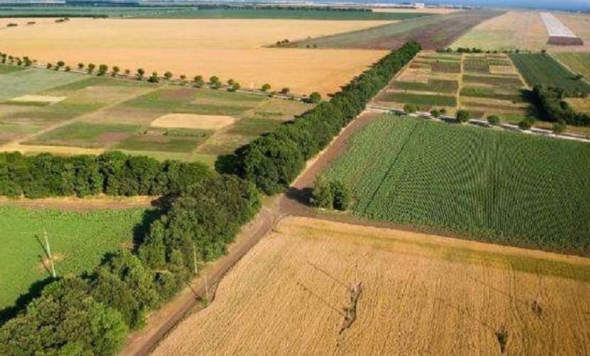 Земельные доли стали «яблоком раздора» оборота земель сельскохозяйственного назначения