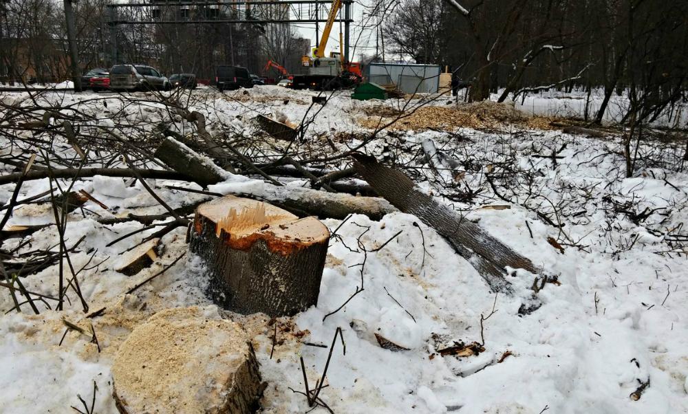 Уничтожение природно-исторического парка Покровское-Стрешнево сняли на видео активисты