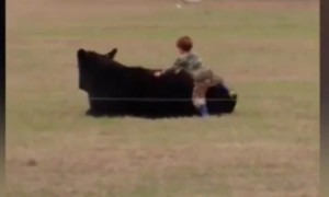 Малыш запрыгнул на быка из-за 20 долларов, обещанных отцом