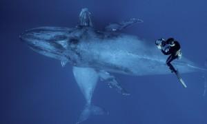 Календарь: 19 февраля - Всемирный день китов и дельфинов