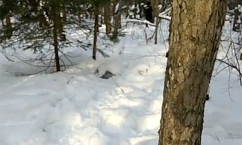 На теле Натальи Меламед не нашли следов насилия: девушка могла замерзнуть