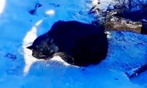 «Скальпель, зажим!»: волгоградцы спасли кота, попавшего в волчий капкан