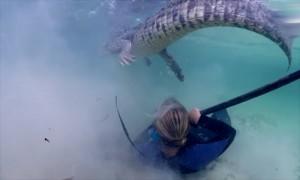 Туристы из США и Великобритании сняли на видео плавание с крокодилами в Мексике