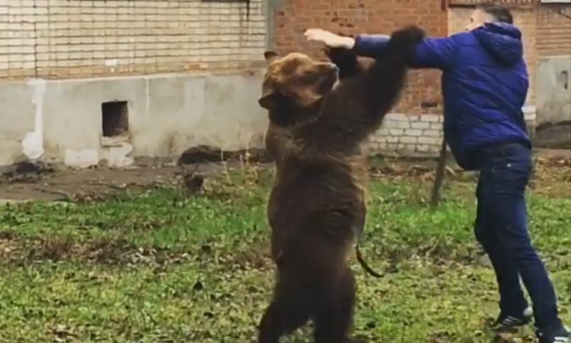 Мужчина выгуливал медведя без намордника в центре Таганрога
