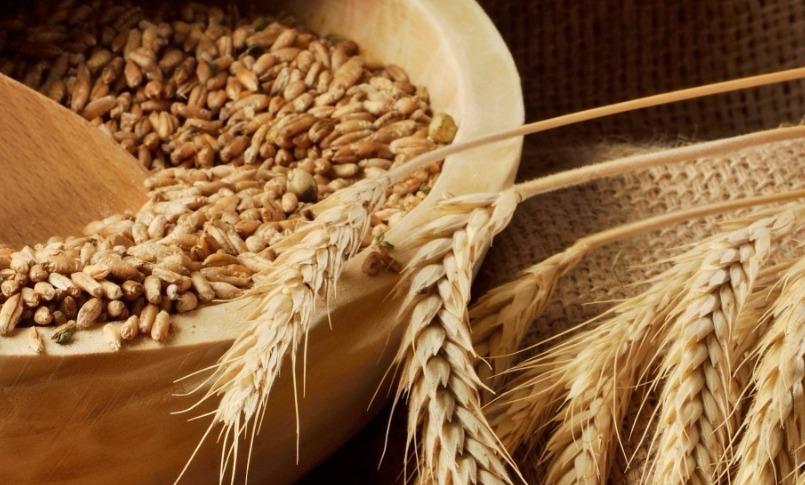 Эрдоган оставил турецкие мукомольные заводы без российской пшеницы