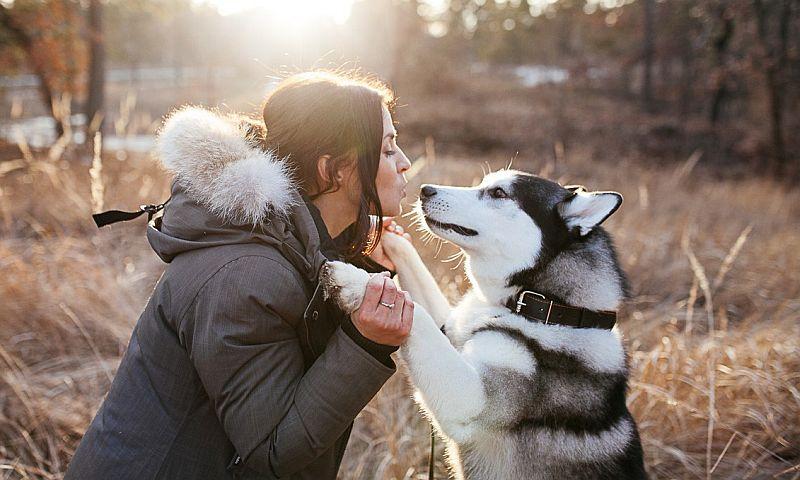 Швейцарские ученые доказали, что собаки ради своей выгоды часто манипулируют людьми