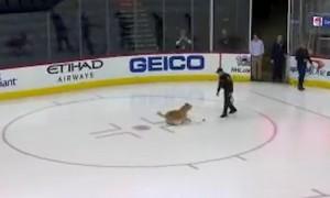 НХЛ похвасталась псом-«хоккеистом»