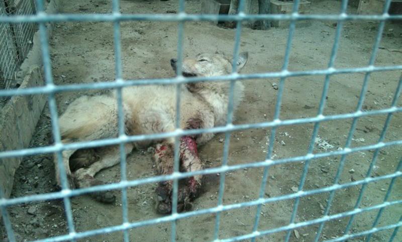 Животные в крови и нечистотах ужаснули посетителей зоопарка в Омской области