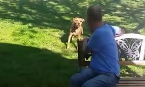 Собака не узнала сильно похудевшего хозяина