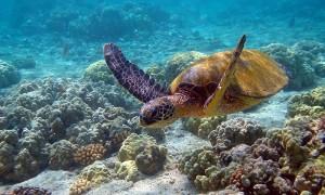 Календарь: 23 мая – Всемирный день черепахи