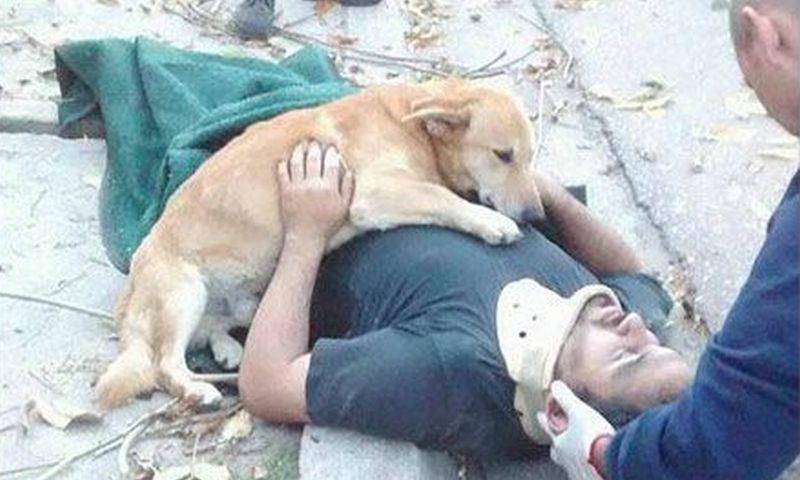 Собака обнимала упавшего с дерева хозяина в ожидании