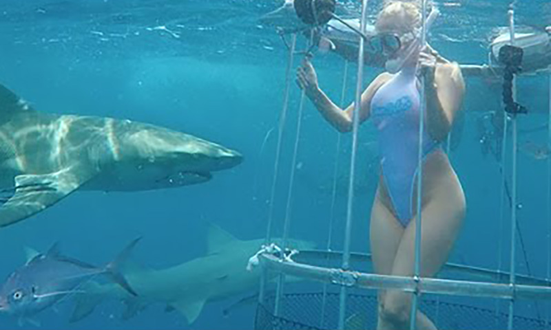Акула напала наизвестную порноактрису вовремя съемок