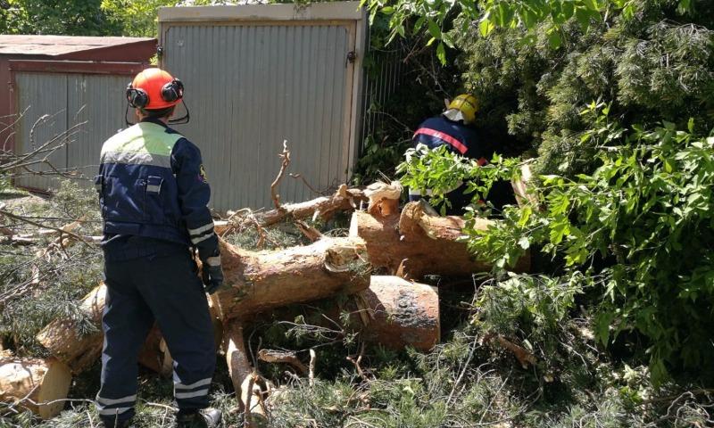 МЧС Подмосковья предупредило о шквалистом ветре и грозе с дождем до утра первого дня лета