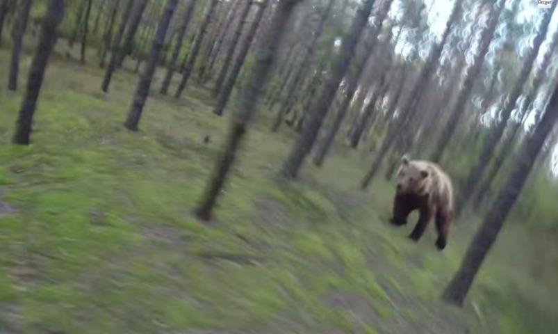 Видео с пытавшимся догнать велосипедиста медведем