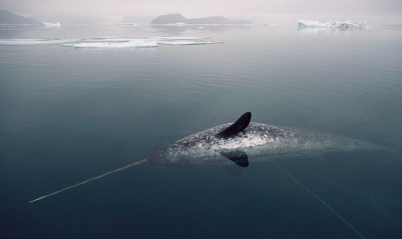 Британским ученым удалось сделать видео охоты самого загадочного в природе животного