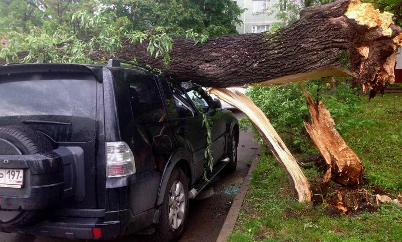 Число погибших от страшного урагана в столице и Московской области достигло 13