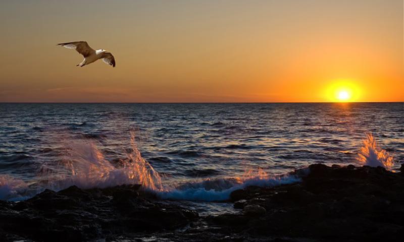 Календарь: 8 июня - Всемирный день океанов