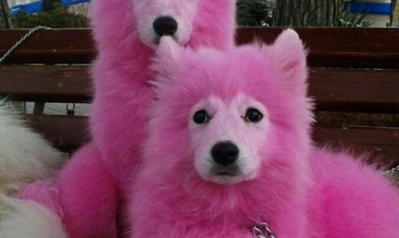 Нашумевших розовых собак Крыма пытаются сбыть через