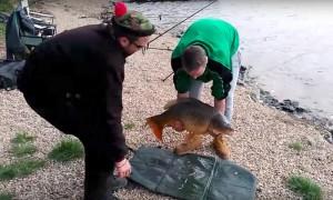 Карп смылся в воду от рыбаков во время фотосессии