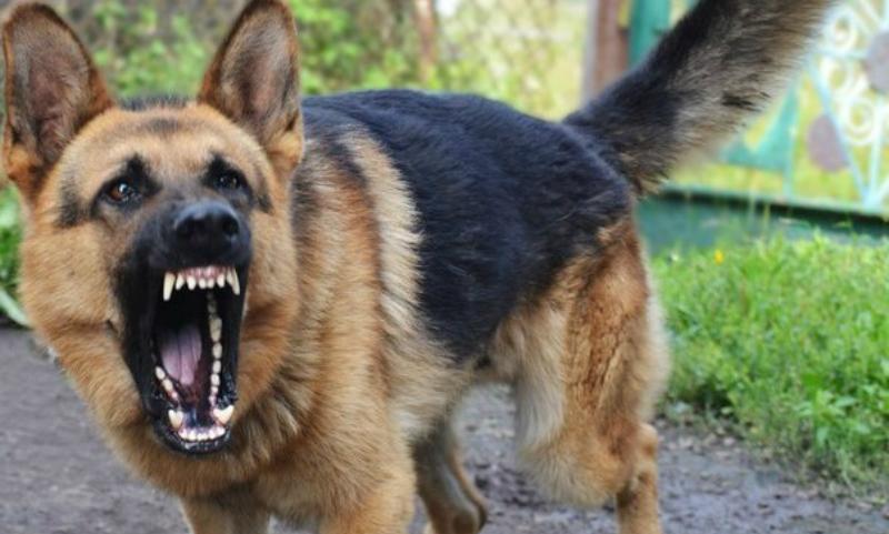 В Башкирии четырехлетний ребенок был заживо растерзан стаей собак