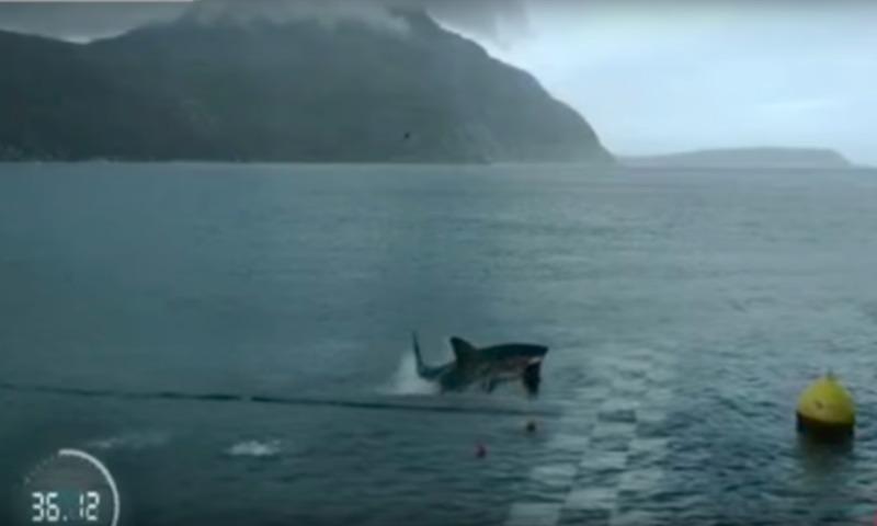 Майкл Фелпс проиграл в ЮАР заплыв большой белой акуле