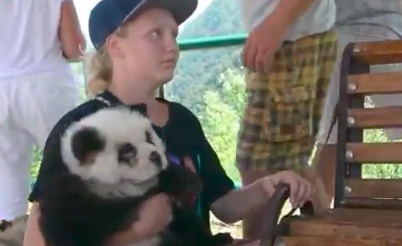 Желающим сделать фото на память в Сочи подсунули собаку под видом панды