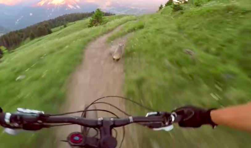 Завораживающая гонка велосипедиста с сурком на горной тропе «взорвала» Интернет