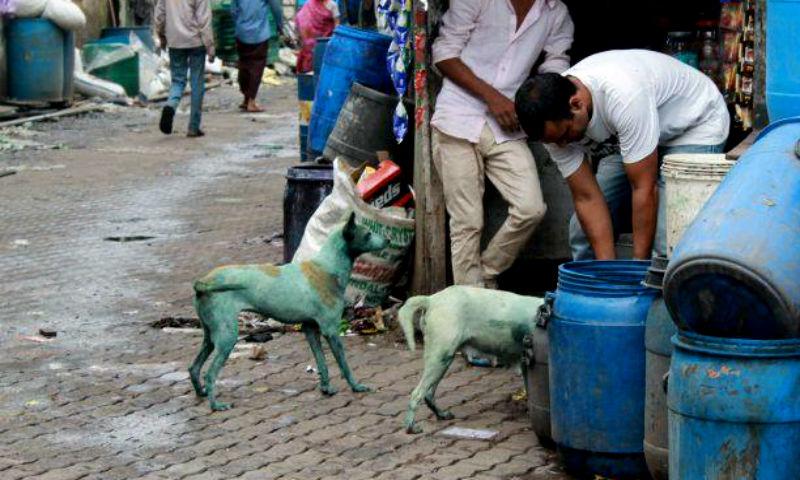 Видео с посиневшими от ядовитых выбросов собаками в Индии опубликовано в Сети