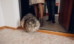 В Нижнем Новгороде приглашают кота на работу за зарплату