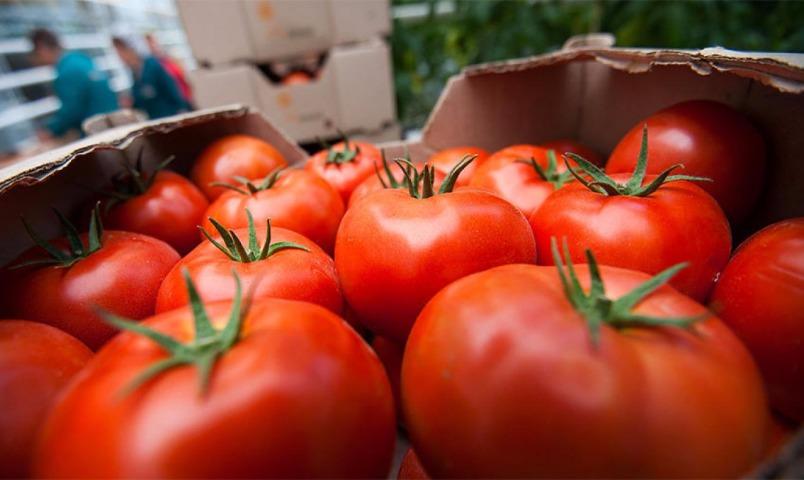 Ткачев пообещал не пускать турецкие помидоры в Россию