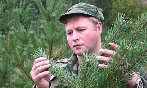 Календарь: 17 сентября - День работников леса