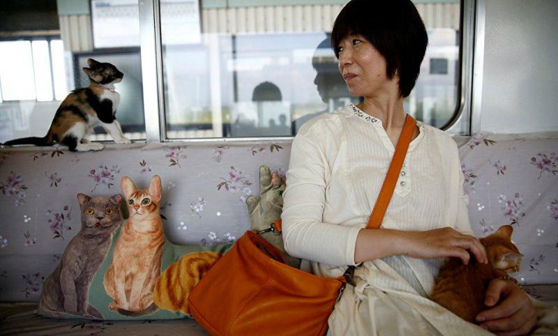 Первый поезд для игры с котиками запущен в Японии