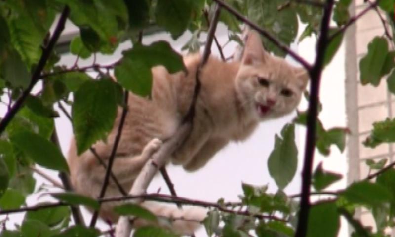 С помощью удочки и корзины спасли кота жители Петербурга