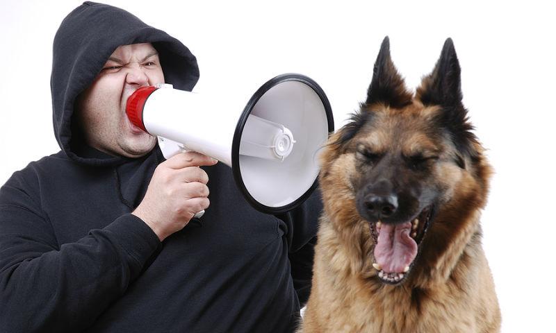 В Новосибирске депутаты запретили лаять и выть, но разрешили хрюкать